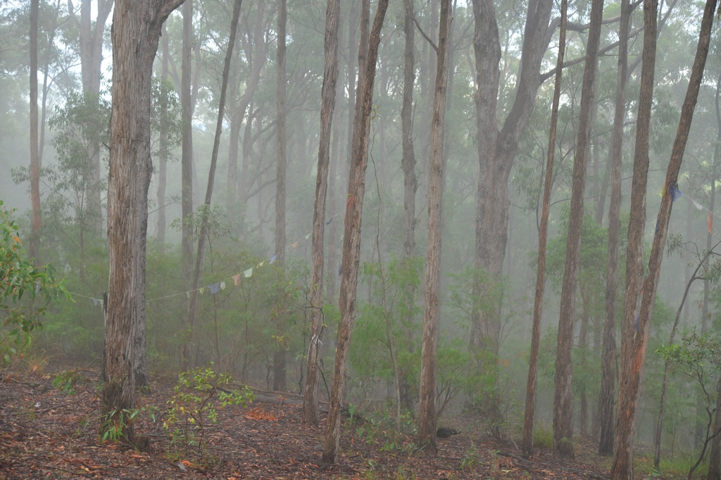 D60_2797_Morning-fog-Ngar-Sth_xl1