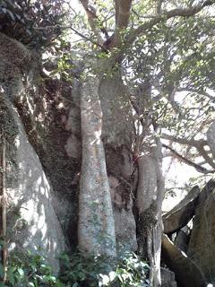 Камни корни ангкора на горе Гулаге