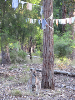 Wallabye-flags1