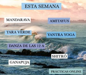 Онлайн-практики из Южного Ташигара с 14-ого по 20-июня